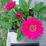 Gardening 2010 - 101_0983.JPG