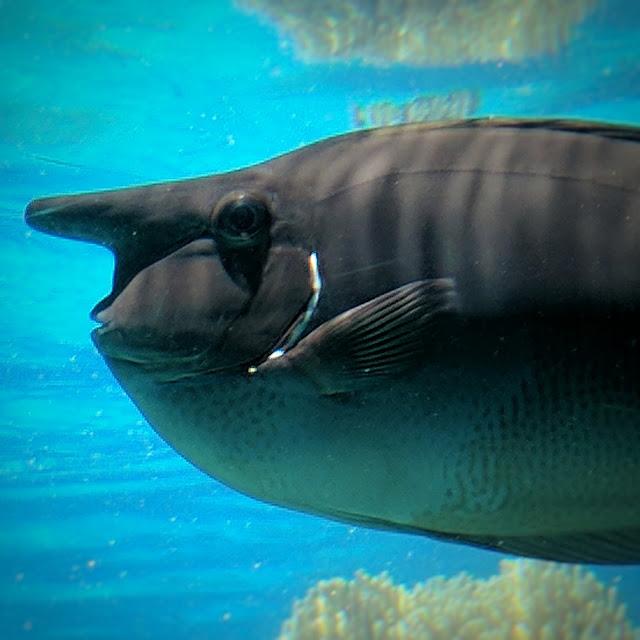 Fish at Sea World (Australia)