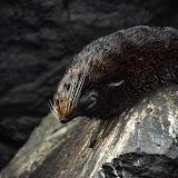 galapagos - Galapagos_FB_2-5.jpg