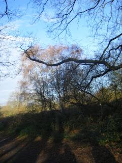 DSCF1519 Path on Wimbledon Common