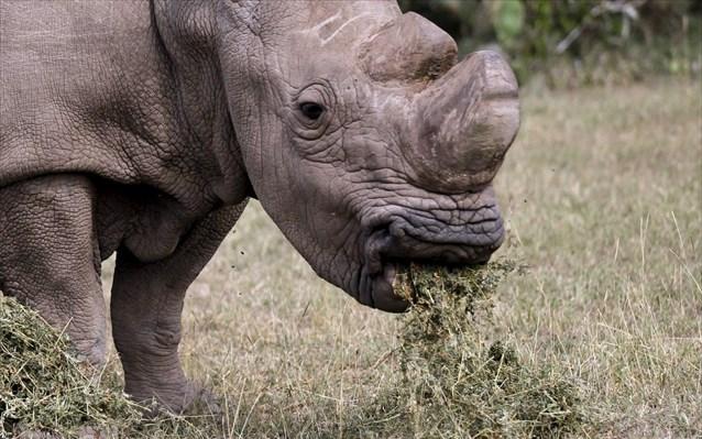 Διεθνής Ένωση Προστασίας της Φύσης: Απειλείται σχεδόν το 30% των ειδών που μελετήθηκαν