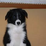 2007 Cucciolata H (11).jpg