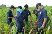 BBPP Batangkaluku Gelar Pelatihan Teknis Pengendalian Hama dan Penyakit Tanaman Jagung