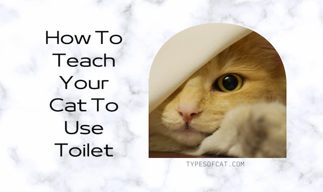 How To Teach Your Cat To Use Toilet