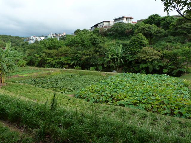 Jouxtant le village de San Jih, plusieurs hectares privés depuis 5 générations.Pourvu que cela dure