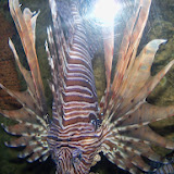 Downtown Aquarium - 116_3894.JPG