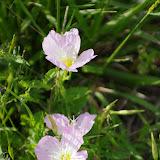 2013 Spring Flora & Fauna - IMGP6326.JPG