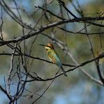 2008_06_13_GRR_Mornington_Wilderness