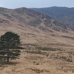 TREE_4538_Edit.jpg