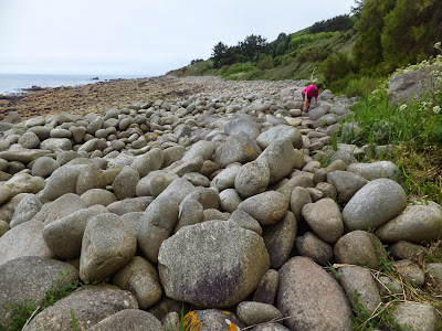The large pebbles at St Loy's Cove