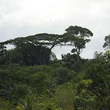 Piste de Coralie (Guyane). 26 novembre 2011. Photo : J.-M. Gayman