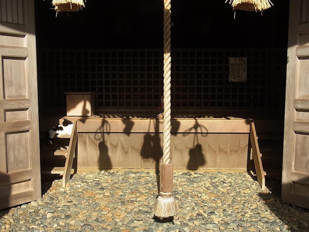 cat-shrine