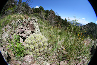 Photo: High elevation cacti above Long Park.
