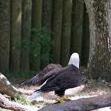 04-07-12 Homosassa Springs State Park - IMGP4571.JPG