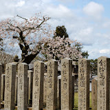 2014 Japan - Dag 8 - jordi-DSC_0604.JPG