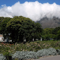 Company Gardens with Table Mountain in background