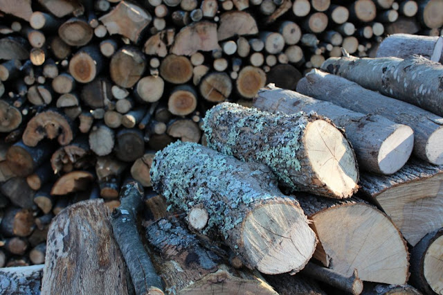 logs stacked for firewood
