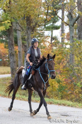 AERC High Mileage Standardbred Bubba