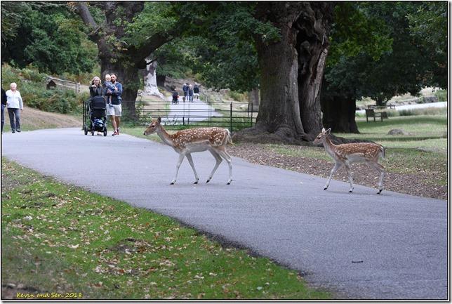 Bradgate Park - September