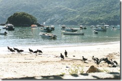 praia-de-abraao-e-os-urubus