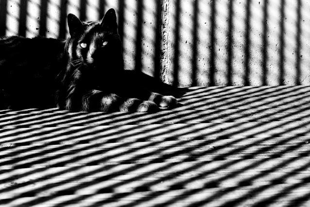Sombras, foto de Carlos Larios