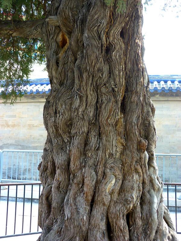 PEKIN Temple Tian tan et une soirée dans les Hutongs - P1260880.JPG
