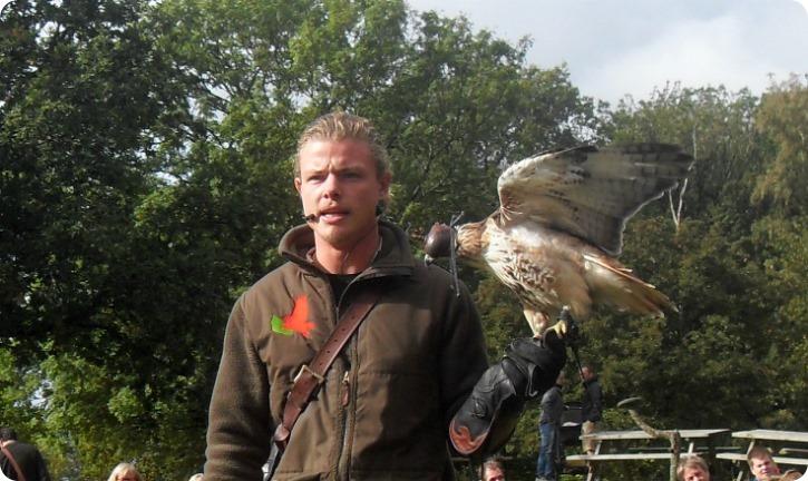 Falk - Bornholms Rovfugleshow