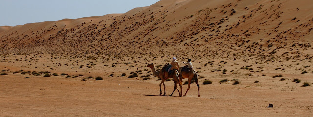 Young Bedouins ride on camels in the desert of Oman