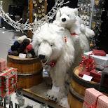 polarbear mayhem in Reykjavik, Hofuoborgarsvaeoi, Iceland