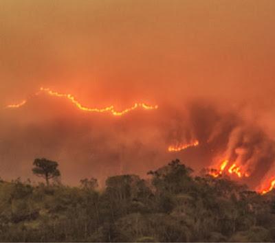 kebakaran hutan dengan api membara