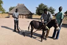 Dobytek a hospodářská zvířata jsou pro místní rodiny důležitým zdrojem obživy. Jen málokteré rodiny je ale uměly využívat k práci na poli. (Foto: Tereza Hronová, ČvT)