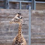 Houston Zoo - 116_8546.JPG