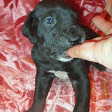 Available black girl #3 @ 4 weeks