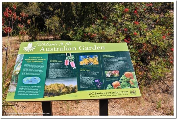 160813_UCSC_Arboretum_146