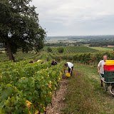 2013 vendanges du chardonnay - 2013%2B09%2B28%2BGuimbelot%2Bvendanges%2Bdu%2BChardonnay%2B125.jpg