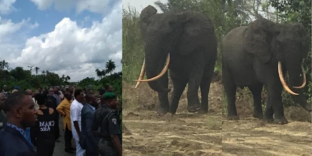 'Make Them No Kill Am O' – Reactions As Netizens Spot An Elephant In Rivers State [Photos]