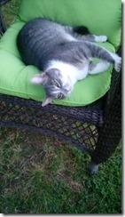 gray and white cat 101717
