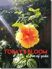 todaysbloom