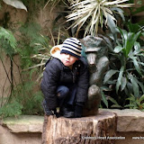 C.H.A Chester Zoo
