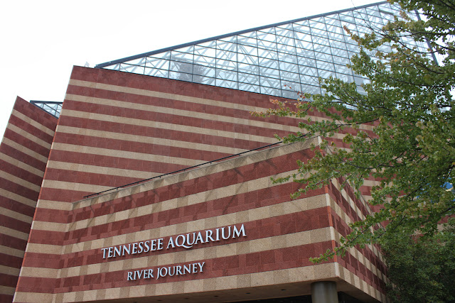 Visiting The Tennessee Aquarium This Is My South