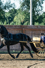 2015-08-22_Baroque_Horse_Show_10312.jpg