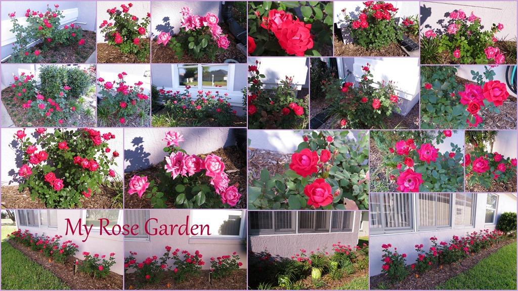 [roses2%5B4%5D]