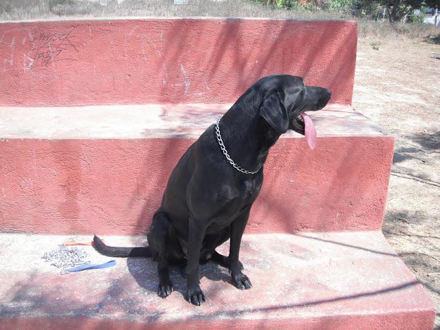 perros enormes