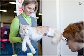 cats-show-25-03-2012-fife-spb-www.coonplanet.ru-030.jpg