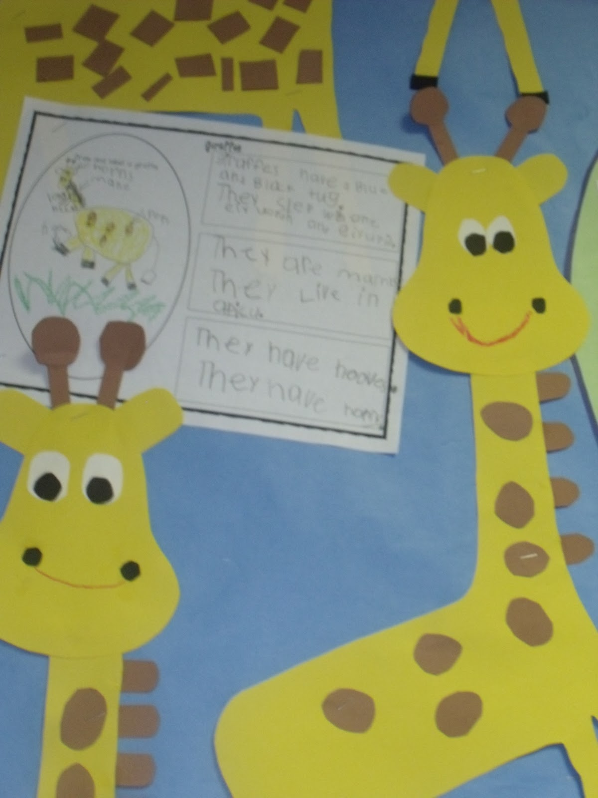 Giraffes And Zebras Zoo Part 2