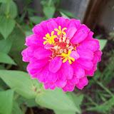 Gardening 2009 - 101_4562.JPG