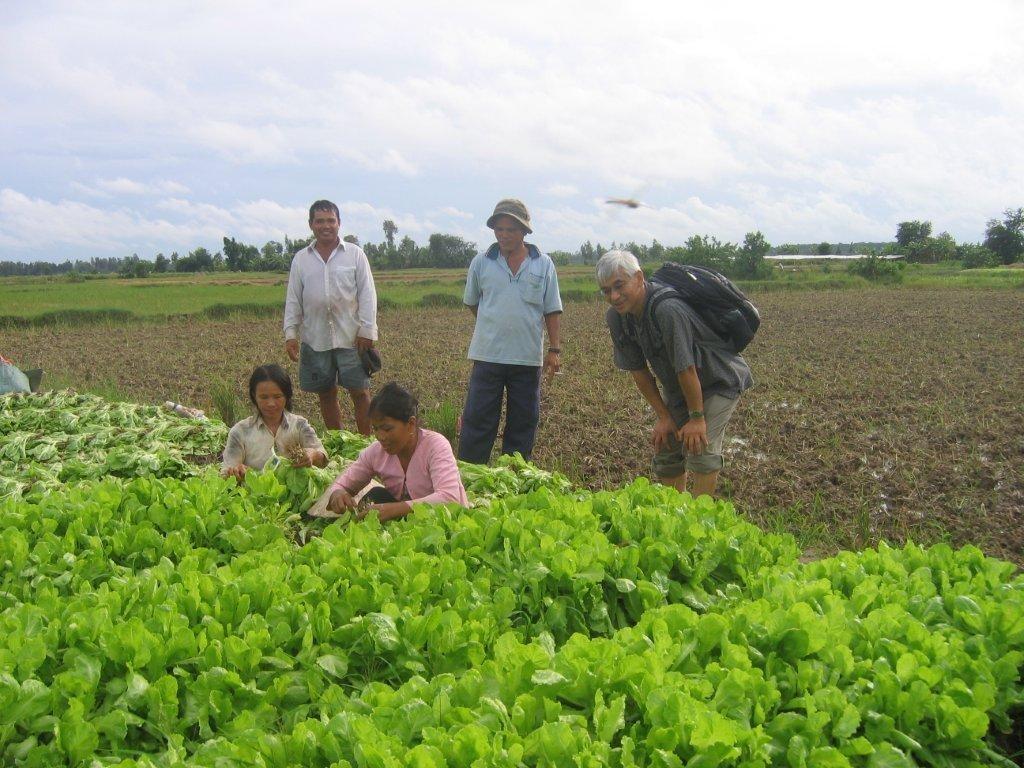 Kỹ thuật trồng rau an toàn (RAT) - 55fbcc9aa1367