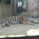 TIGERS Preservation Station - Myrtle Beach - 040510 - 18