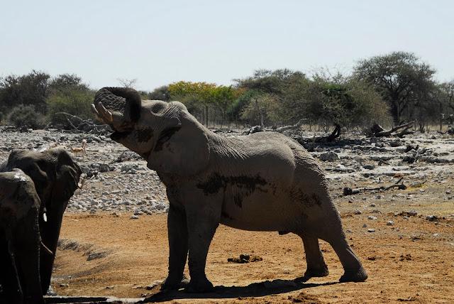 أفضل ما في أفريقيا  Best of Africa Namibia_180807124343