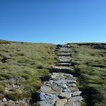 Main Range track on Carruthers Peak (267881)